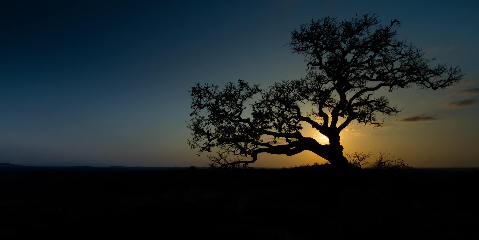 Rejse Til Afrika På Ferie Træ Mod Solnedgang